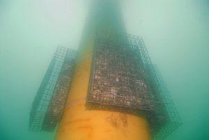 observation biodiversité offshore
